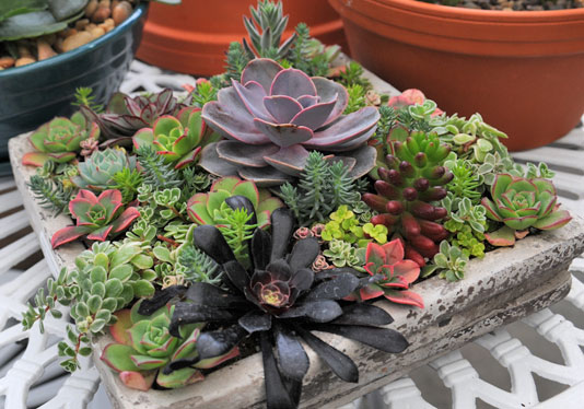 Planting Succulents In Containers Bowls