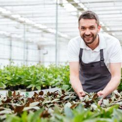 koetsiers greenhouse-AdobeStock_172054474